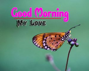 Butterfly Latest Good Morning Images
