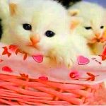 Cat sweet images for profile Images Pics Free