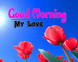 Cute Good Morning For Whatsapp Photo Free Download Hd