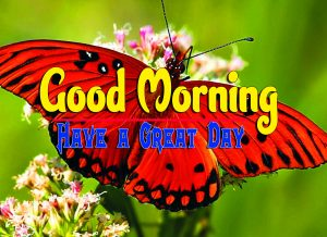 Cute Good Morning For Whatsapp Wallapper Free Download