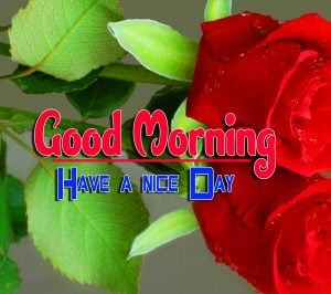 Cute Good Morning For Whatsapp Wallpaper Download