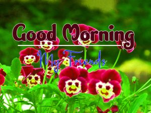 Cute Good Morning Wednesday Download Hd