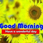 Cute Sunflower Good Morning