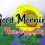 Download Cute Sunflower Good Morning Images
