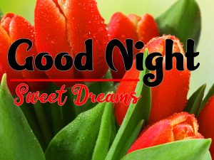 Flower Free Good Night Tuesday Images Download