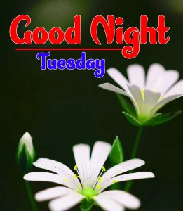 Flower Good Night Tuesday Images HD Download