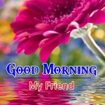 Flower Nature Latest Good Morning Images