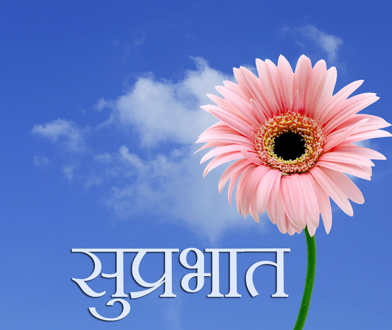 Flower Suprabhat Images Photo In HD