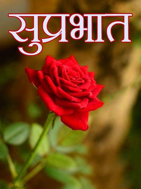 Flower Suprabhat Images Wallpaper