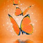 Free Butterfly sweet images for profile Pics Download