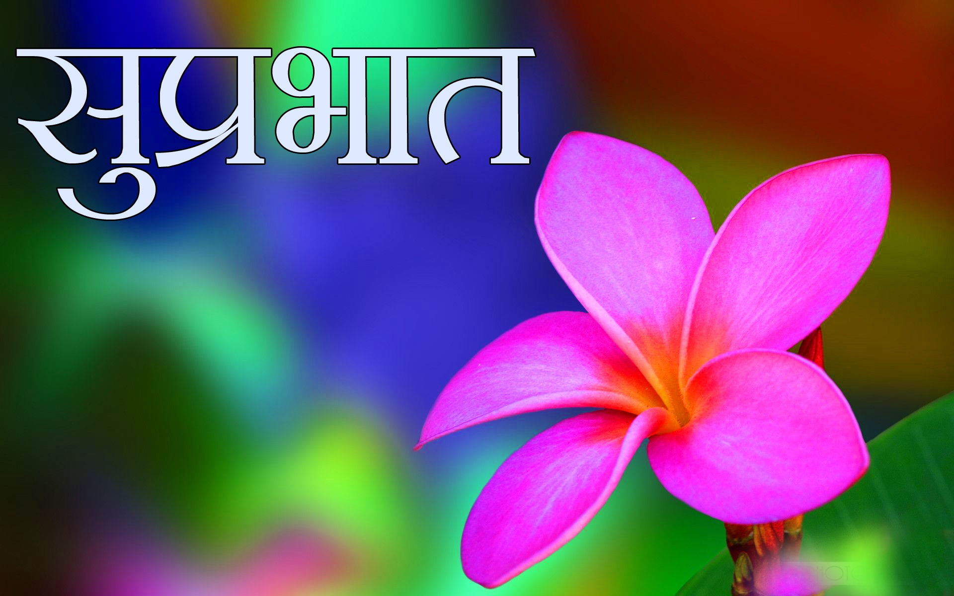Free Flower Suprabhat Images Pics Pictures