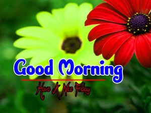 Free Nice Good Morning Friday hd Wallpaper