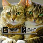 Fresh Good Night Images