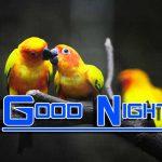 Fresh Good Night Images Wallpaper Free Download