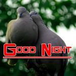 Latest Fresh Good Night Images Pics Pictures Download