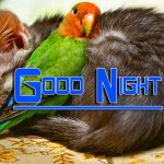 Fresh Good Night Images Wallpaper Download
