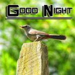 Free Fresh Good Night Images Wallpaper HD