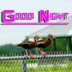 Fresh Good Night Images Wallpaper Latest Download