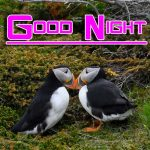 Free 1080p Fresh Good Night Images Pics Download