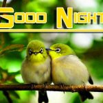 Free Fresh Good Night Images Pics Download
