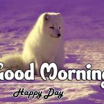 Full HD Good Morning Images pics hd