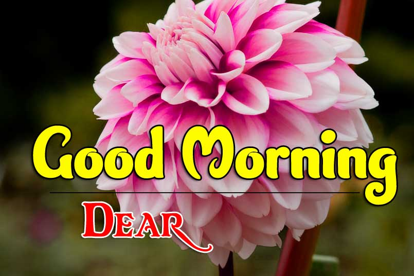 Full HD Good Morning Images pictures free hd