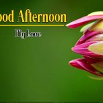 Good Afternoon HD Free Download Photo Wallpaper