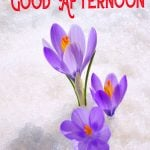 Good Afternoon Images Download for Friend