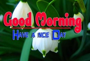 Good Morning For Facebook Pics Pictures