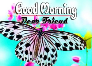 Good Morning For Whatsapp Download HD