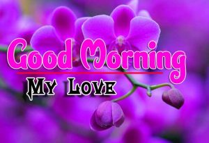 Good Morning For Whatsapp Download Photo