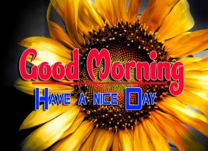 Good Morning For Whatsapp Images Download