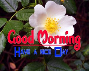 Good Morning For Whatsapp Images Free