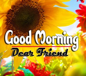 Good Morning For Whatsapp Images Pictures