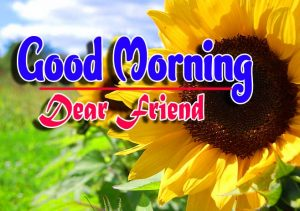 Good Morning For Whatsapp Photo Pictures