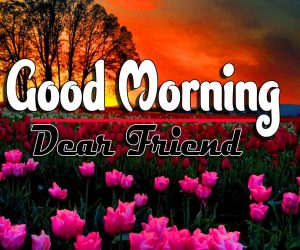 Good Morning For Whatsapp Pics Pictures