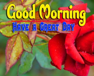 Good Morning For Whatsapp Pictures Hd