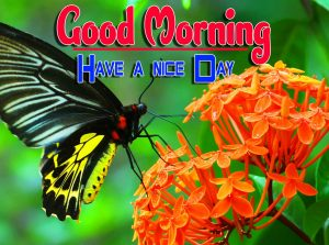 Good Morning For Whatsapp Wallpaper Images