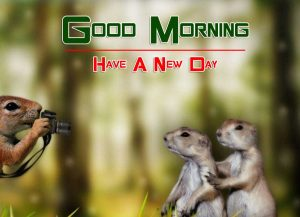 Good Morning Images Free Hd