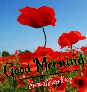 Good Morning Images photo pictures free download hd