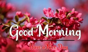 Good Morning Images photo pictures free hd
