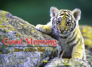 Good Morning Pictures Free