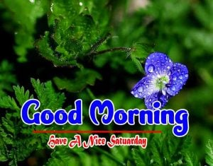 Good Morning Saturday Pictures