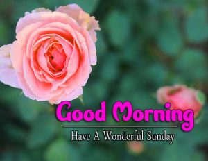 Good Morning Sunday Images Photo HD