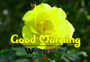 Good Morning Wednesday Free Download