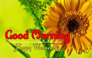 Good Morning Wednesday Images Pictures
