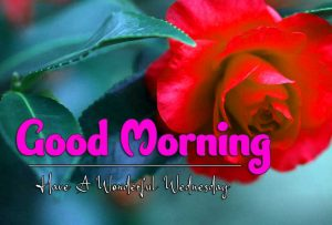 Good Morning Wednesday Images Wallpaper