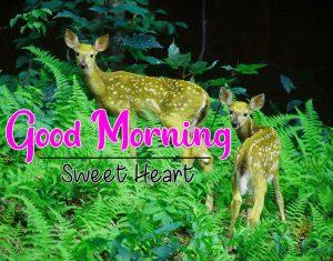Good Morning photo Free hd