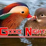 Free Good Night HD Images Pics Download