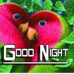 Good Night HD Images Pics Download